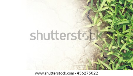 Soft focus of green grass on the cracked dry mud with copy space for text and soft vintage color.Global worming effect. - stock photo