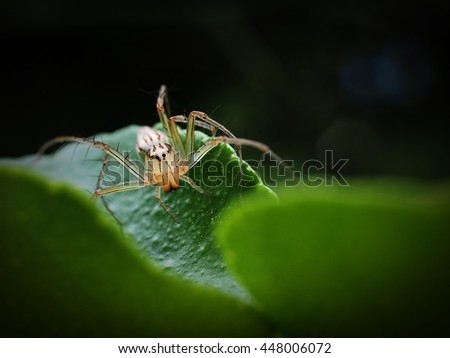 Soft Focus of of Lynx Spider and Nature Bokeh - Nature Macro Close Up - stock photo