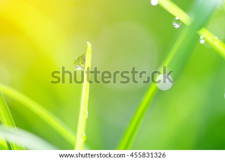 Soft focus of water droplets on grass in morning light, Blurred natural background - stock photo
