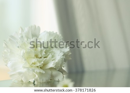 Soft focus of white carnation flower on a glass table and the light from the window.  - stock photo
