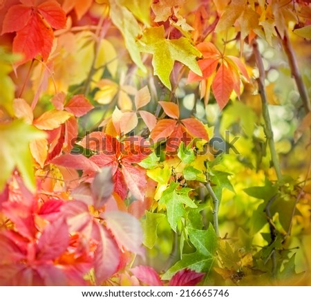 Soft focus on colorful foliage-autumn leaves in forest - stock photo