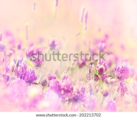 Soft focus on  red clover in flowering - stock photo