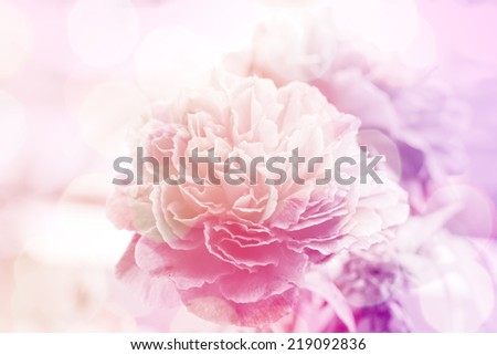 Soft focus photo Roses flower made with pastel tones