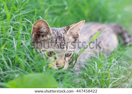 Soft focus,Selective focus, lose up of cute little tabby kitten