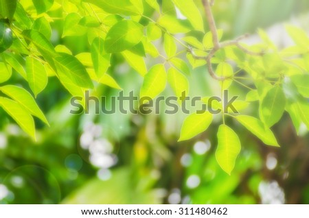 Soft focus Tree leaf on nature background and flare