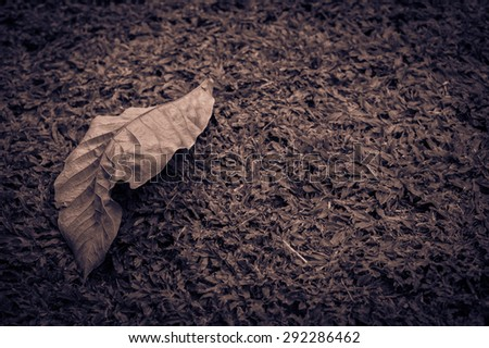 Soft focus Vintage dry leaf on green grass - stock photo
