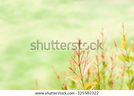 Soft focused of Red leaves for background - Soft light tone