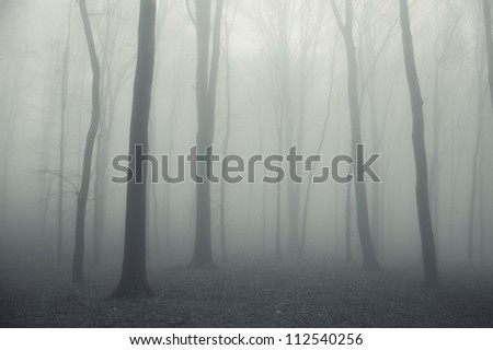 soft forest background - stock photo