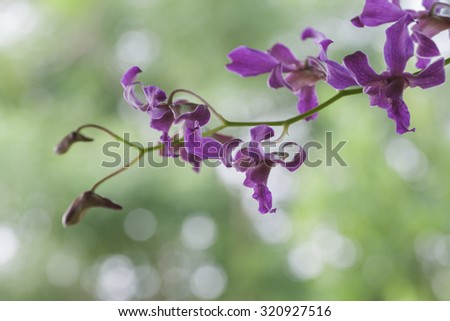 Soft image of purple orchid with out focus background suitable for background and wall paper. Selective focus with shallow depth of field. - stock photo