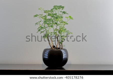 Soft light from grass wall with little plant and jar, Image of interrior apartment in Thailand - stock photo