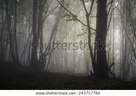 soft light in misty forest