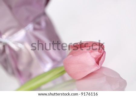 Soft pink tulip - stock photo