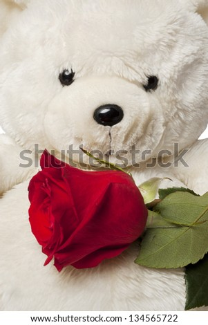 Soft plush teddy bear toy clutching a single red rose in its arm - stock photo