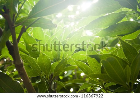 Soft sun rays through thick plants - stock photo