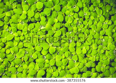 soft tone of green fresh. Rain drops on fresh green leaves. Green background with leaves. - stock photo