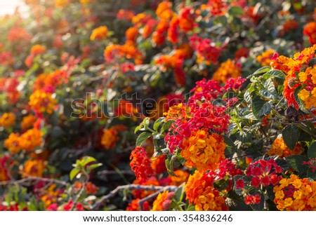 Soft vignette orange flower on tree. Orange cute flower. Orange tiny flower on tree. Vivid Orange flower. Orange blooming flower and leaf. Orange wildflower on leaf. Blooming flower. Orange flora. - stock photo