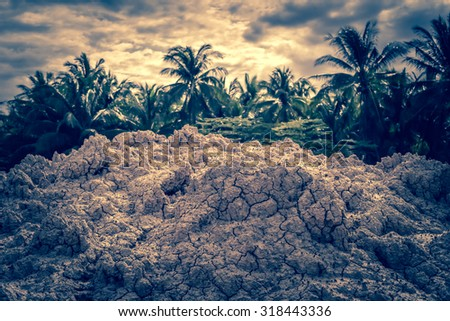 soil and nature background - stock photo