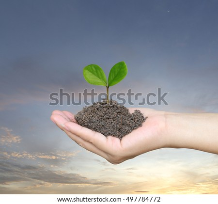 Soil in a Woman hand and treetop on soil with background Sunset in the evening time.