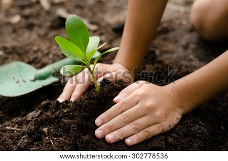 Soil,Planting,Seeding,Seedling,Close up Kid hand planting young tree