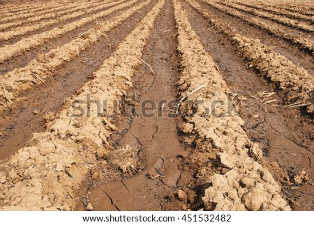 soil preparation;sugarcane