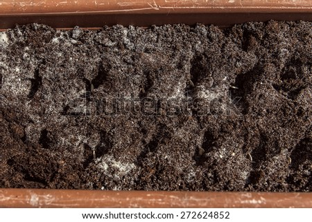 soil with seed in a planter, closeup - stock photo