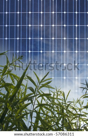 Solar Panel concept with a green plant - stock photo