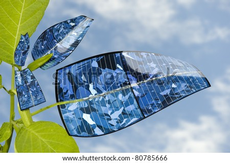 Solar panel plant against the blue sky. Evolution of the leaf. - stock photo