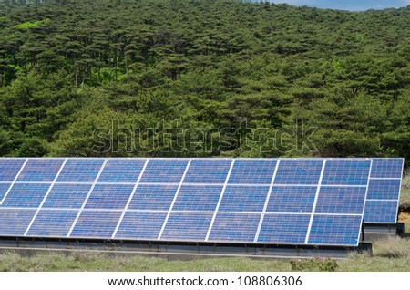 Solar power and primeval red pine forest - stock photo