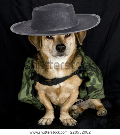 soldier dog - stock photo