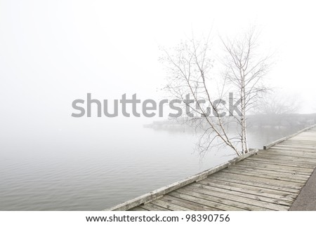 Solitary clump of white birch trees grow near wooden pier extending along foggy Lake Ontario shore. Peaceful landscape, horizontal, desaturated colors, copy space. - stock photo