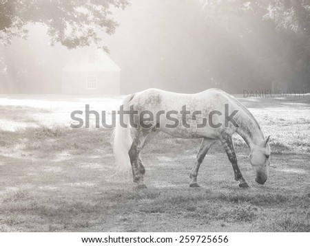 Solitary horse in pasture