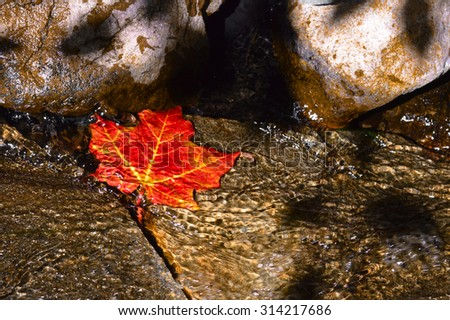 Solitary leaf trapped in the rippling waters of a stream. - stock photo
