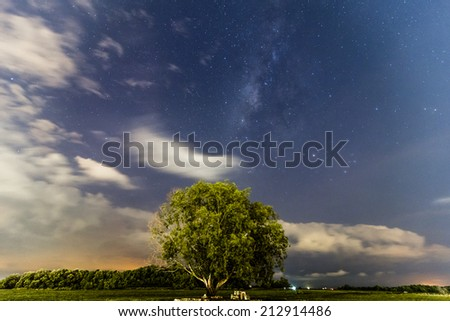 Solitary tree and milky way in the background.  - stock photo