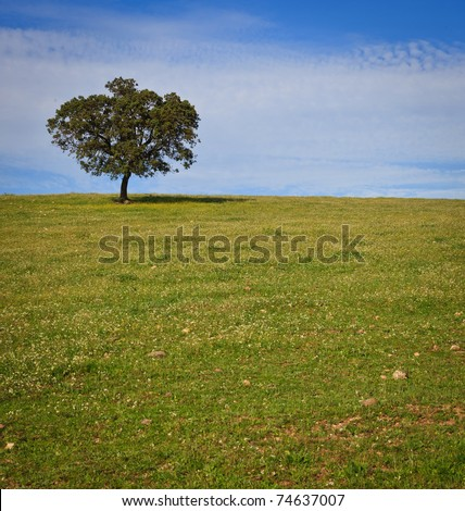Solitary tree in a field with grass to the foreground over a clear blue sky - stock photo