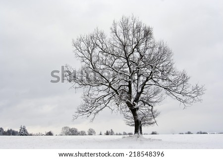 solitary tree in winter landscape - stock photo