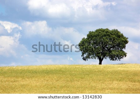 Solitary tree in yellow field. - stock photo