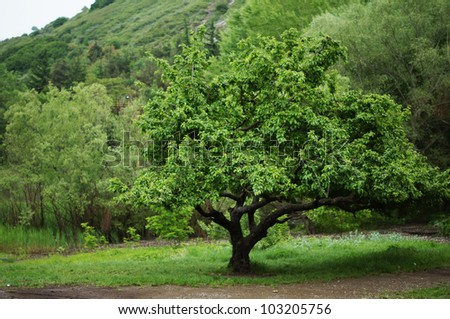 solitary tree on grassy hill in the forest - stock photo