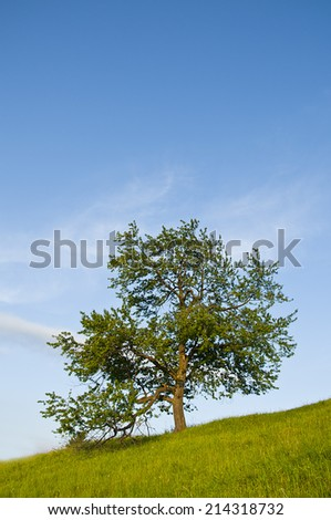 solitary tree on the hill, vertical image