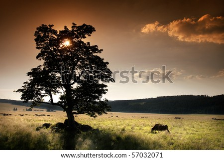 Solitary tree on the meadow and cattle - stock photo