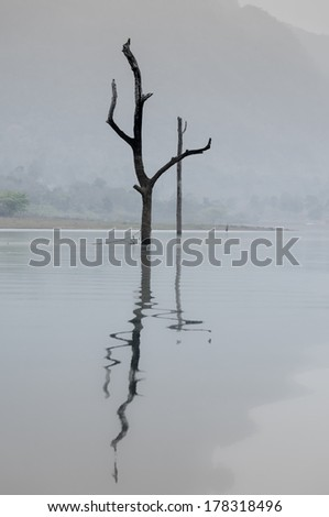 Solitude dead trees in the morning mist in lake in dam and reflection  - stock photo