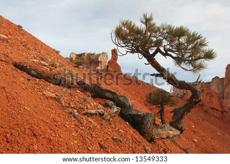 Solitude tree growing on a slope of red sand and rocks. Capitol Reef national park. Utah. USA