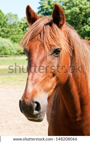 Solo brown horse with whiskers - stock photo