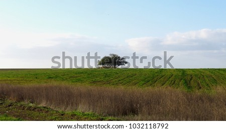 Solo green tree in a green landscape nature