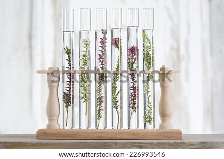 solution of medicinal plants and flowers - Decorative Objects-flowers in test tubes - stock photo