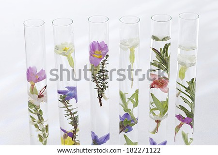 solution of medicinal plants and flowers - Decorative Objects-flowers on test tubes  - stock photo