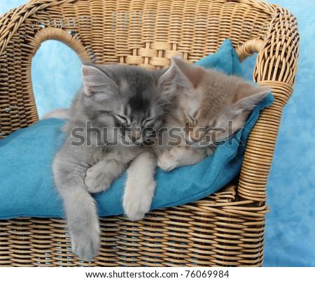 Somali kitten siblings asleep on a wicker chair - stock photo