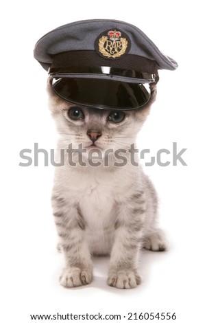 somali Kitten wearing RAF pilots hat studio cutout - stock photo