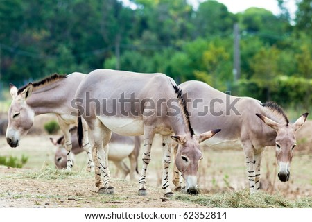 somali wild group eating in nature
