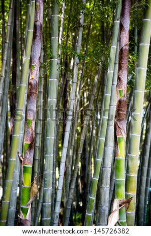 some bamboo trees
