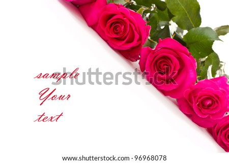 some beautiful roses red on a white background